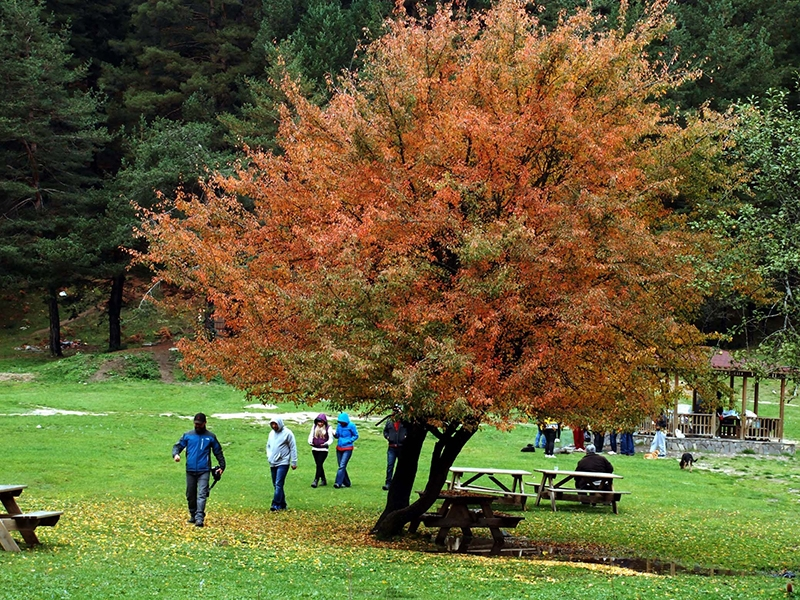 En güzel sonbahar enstanteleri 127