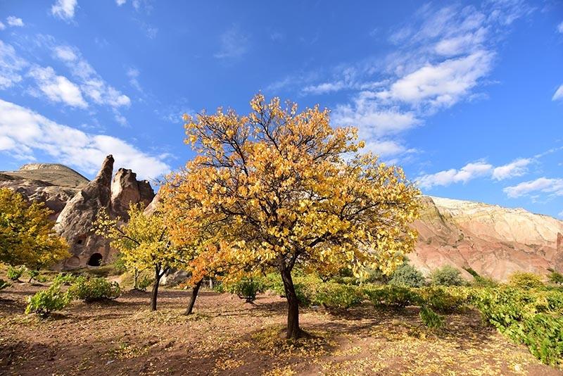 En güzel sonbahar enstanteleri 24