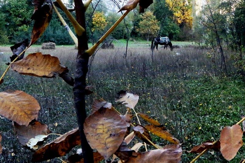En güzel sonbahar enstanteleri 62