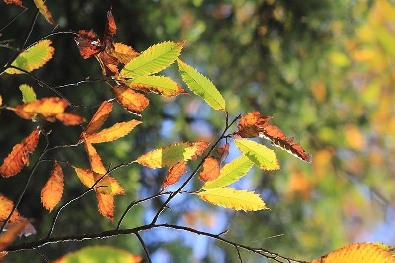 En güzel sonbahar enstanteleri 78