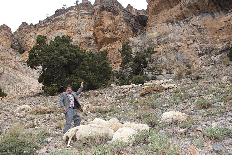 Her şey ilk koyunun uçurumdan düşmesiyle başladı 4