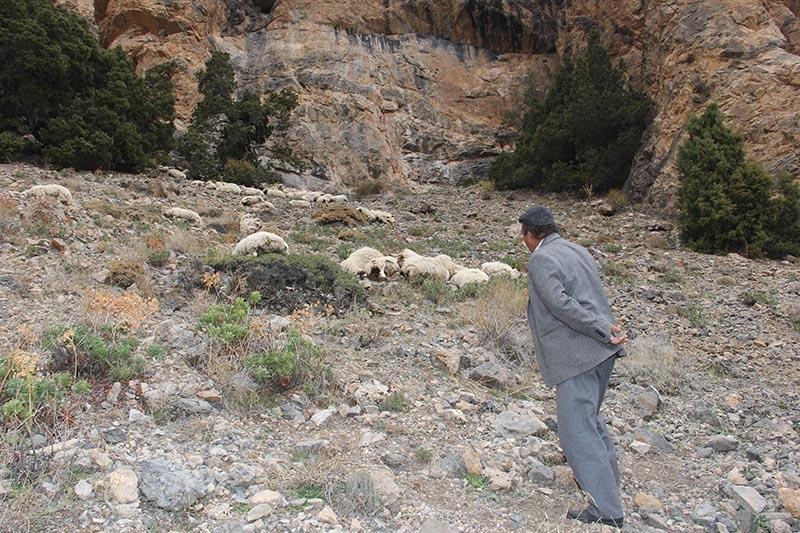 Her şey ilk koyunun uçurumdan düşmesiyle başladı 5