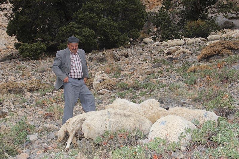 Her şey ilk koyunun uçurumdan düşmesiyle başladı 6