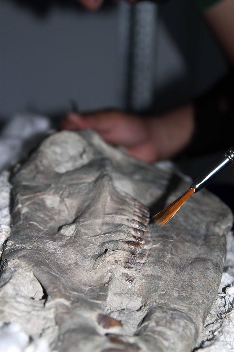 Kazı evi, milyonlarca yıllık fosillere ev sahipliği yapıyor 17