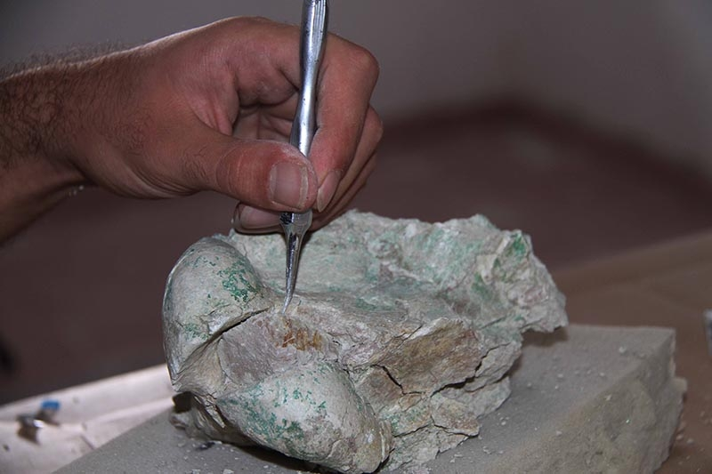 Kazı evi, milyonlarca yıllık fosillere ev sahipliği yapıyor 7