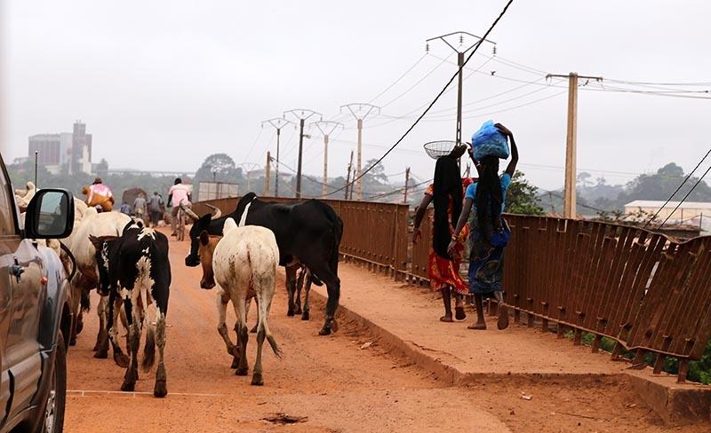 Fildişi kadını yokluklara rağmen hayata dört elle sarılıyor 10