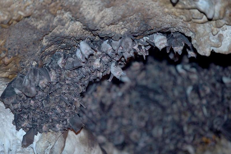 """İçinden yeraltı nehri akan mağara """"Dupnisa"""" 11"""