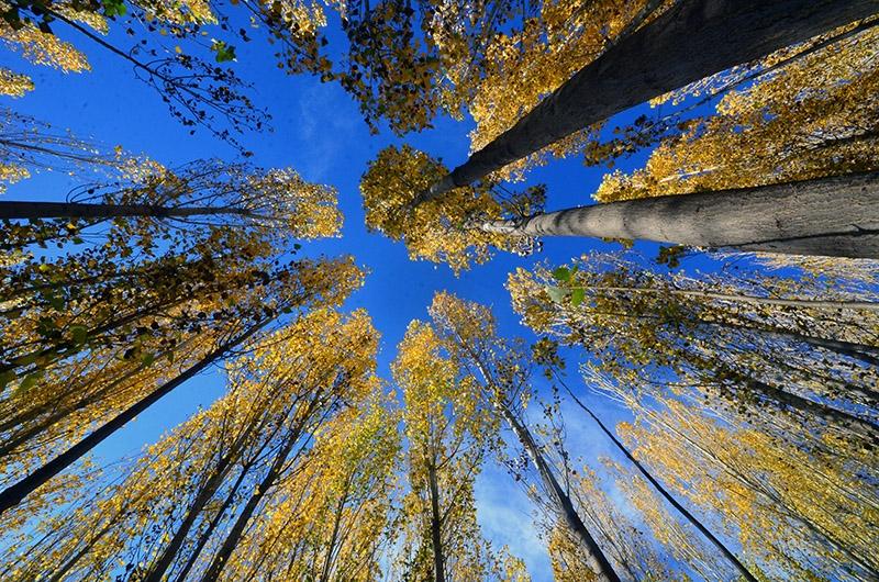 En güzel sonbahar fotoğrafları-2 11