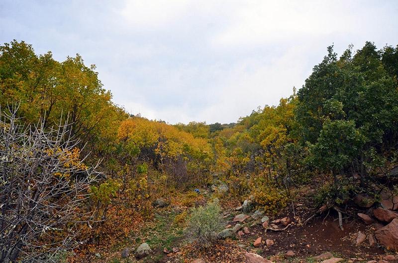 En güzel sonbahar fotoğrafları-2 12
