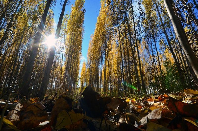 En güzel sonbahar fotoğrafları-2 2