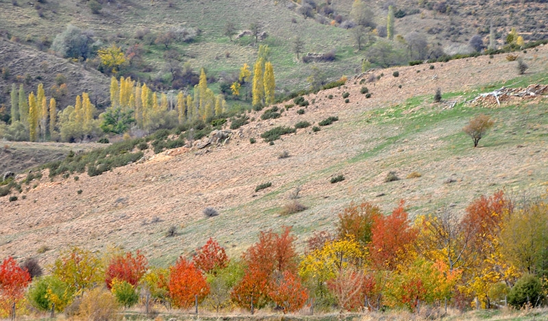En güzel sonbahar fotoğrafları-2 29