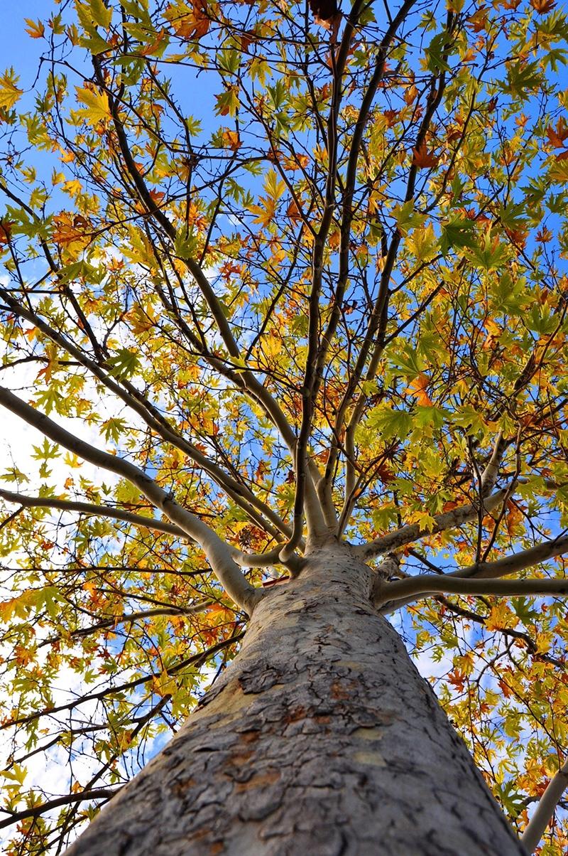 En güzel sonbahar fotoğrafları-2 34