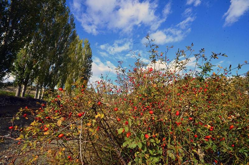 En güzel sonbahar fotoğrafları-2 4