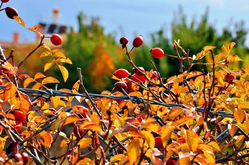 En güzel sonbahar fotoğrafları-2 43