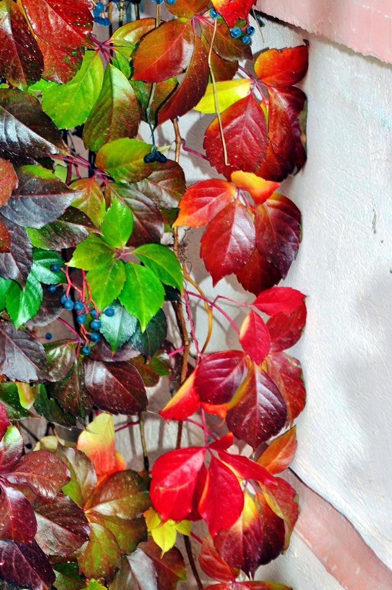 En güzel sonbahar fotoğrafları-2 44