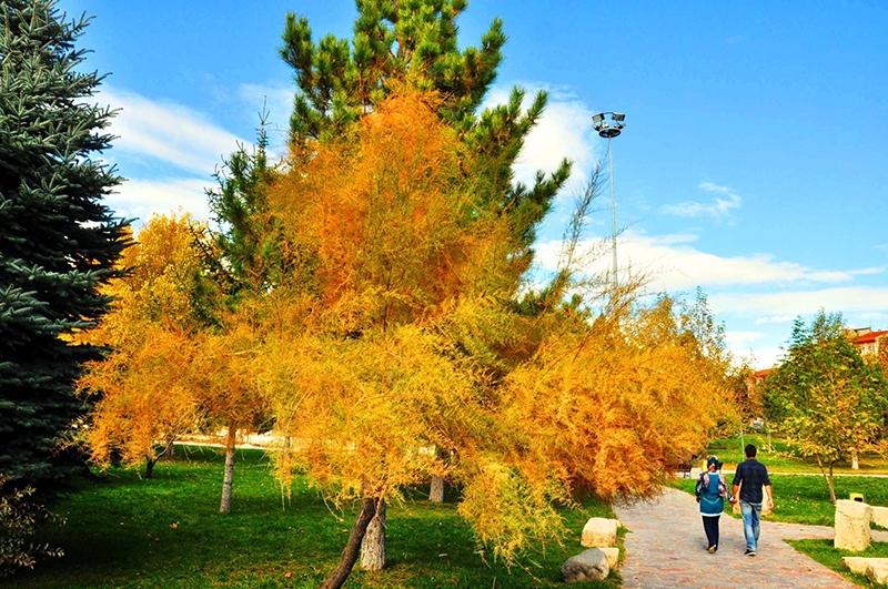 En güzel sonbahar fotoğrafları-2 47