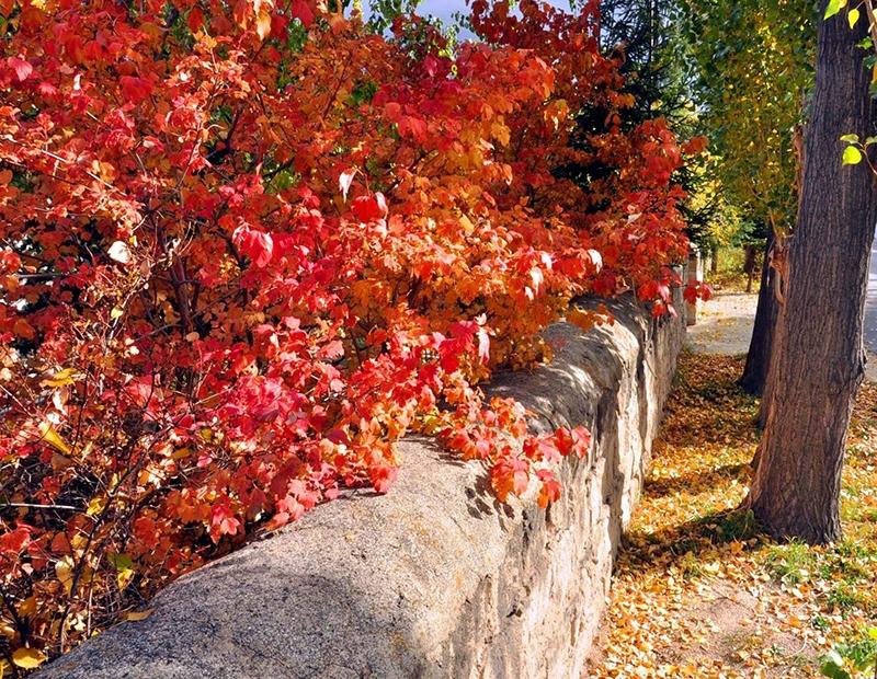 En güzel sonbahar fotoğrafları-2 49