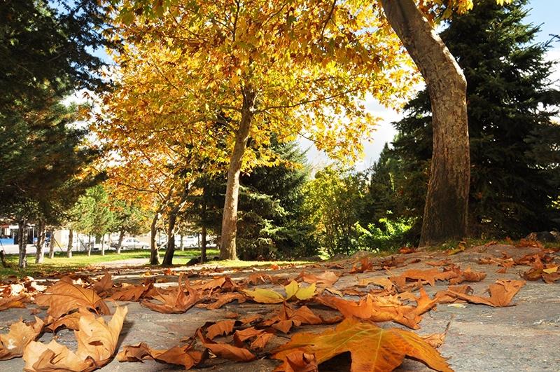 En güzel sonbahar fotoğrafları-2 50