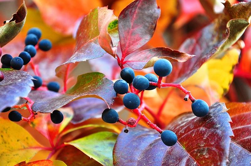 En güzel sonbahar fotoğrafları-2 53
