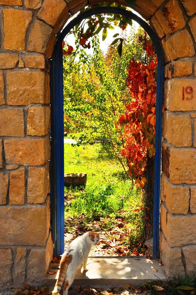 En güzel sonbahar fotoğrafları-2 56
