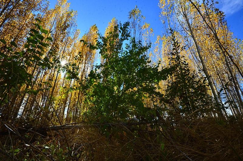 En güzel sonbahar fotoğrafları-2 7