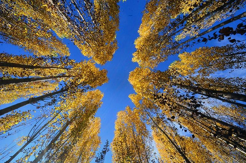 En güzel sonbahar fotoğrafları-2 9