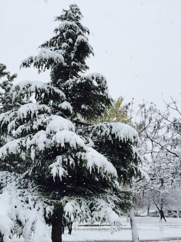 Konya'dan kar manzaraları 38