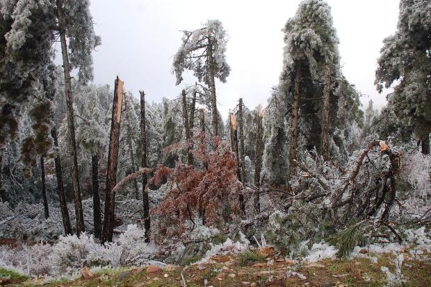 Türkiye'den kar manzaraları 11