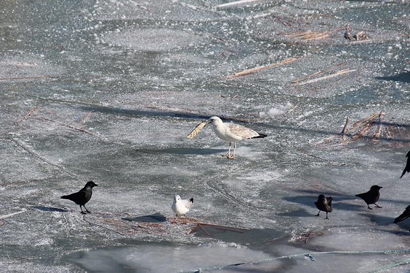 Beyşehir Gölü kıyıları buz tuttu 2