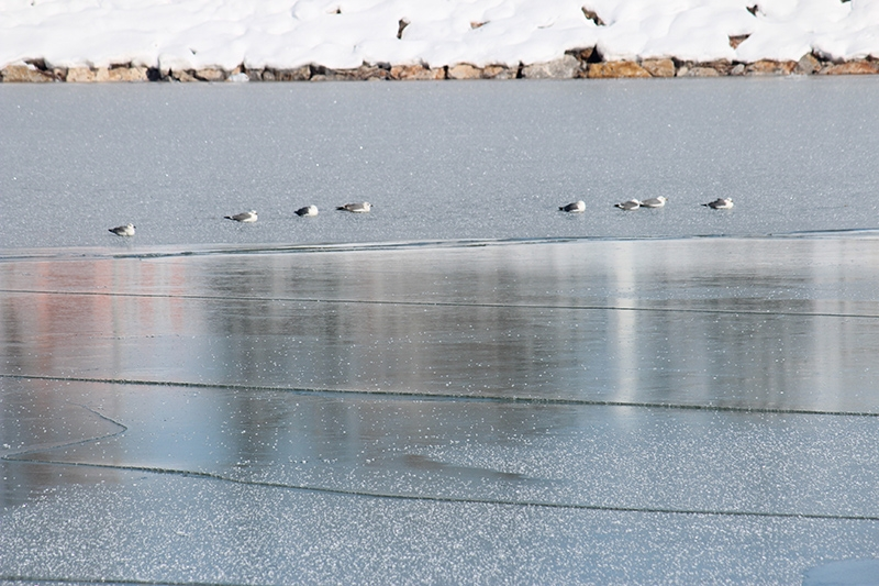 Beyşehir Gölü kıyıları buz tuttu 6