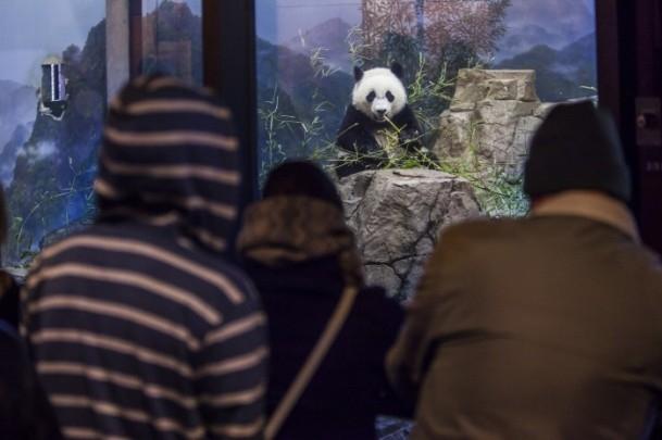 Washington Smithsonian Ulusal Hayvanat Bahçesi 6