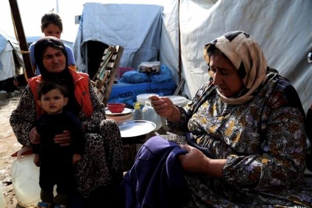 Kampların çilekeş anneleri 6