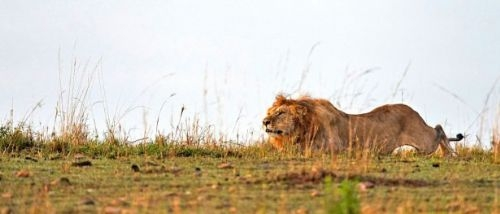 Vahşi doğadan inanılmaz anlar 1