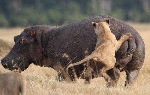 Vahşi doğadan inanılmaz anlar 14
