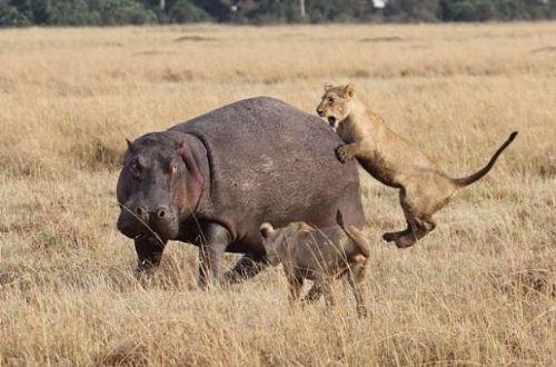 Vahşi doğadan inanılmaz anlar 18
