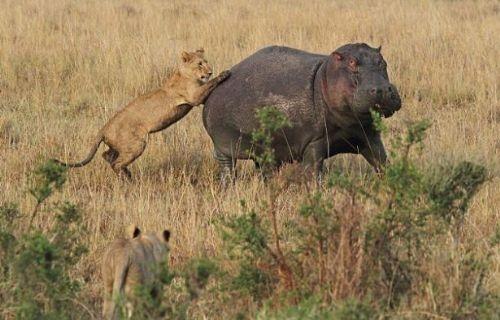 Vahşi doğadan inanılmaz anlar 19