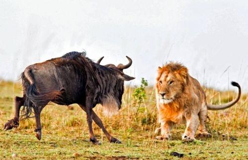 Vahşi doğadan inanılmaz anlar 2