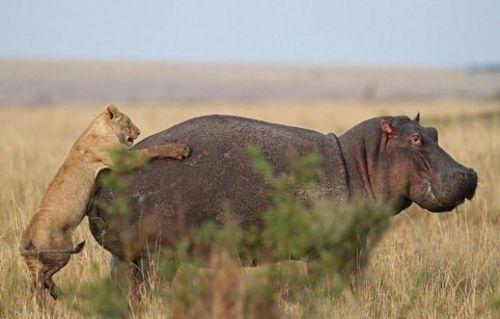 Vahşi doğadan inanılmaz anlar 26