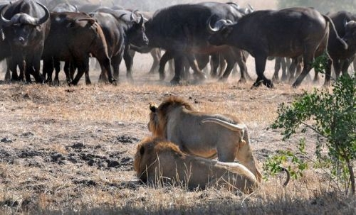 Vahşi doğadan inanılmaz anlar 29