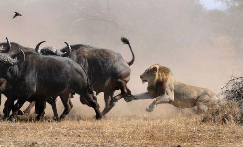 Vahşi doğadan inanılmaz anlar 30