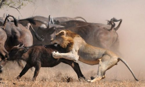 Vahşi doğadan inanılmaz anlar 31