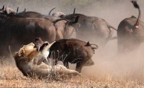 Vahşi doğadan inanılmaz anlar 33