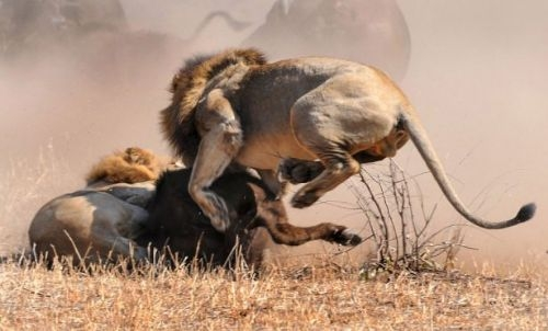 Vahşi doğadan inanılmaz anlar 34