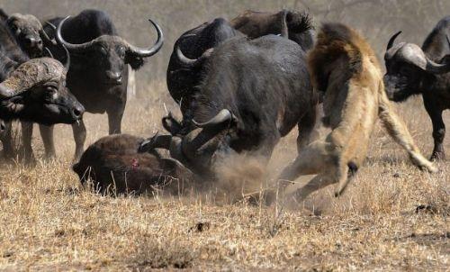 Vahşi doğadan inanılmaz anlar 36