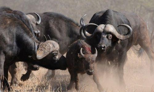 Vahşi doğadan inanılmaz anlar 37