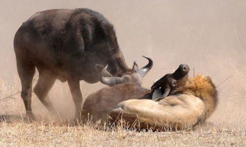 Vahşi doğadan inanılmaz anlar 39