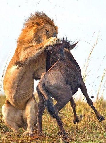 Vahşi doğadan inanılmaz anlar 4