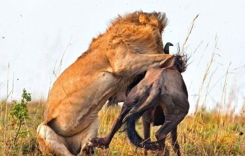 Vahşi doğadan inanılmaz anlar 5