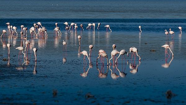"""Düden Gölü'nün zarif misafirleri """"flamingolar"""" 1"""
