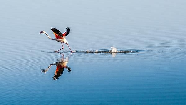 """Düden Gölü'nün zarif misafirleri """"flamingolar"""" 3"""